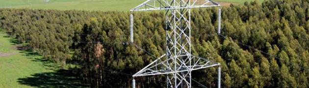 Powerlines near forest